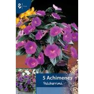 Achimenes Pulcherrima