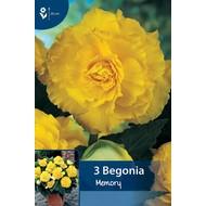 Begonia Dubbel Geel