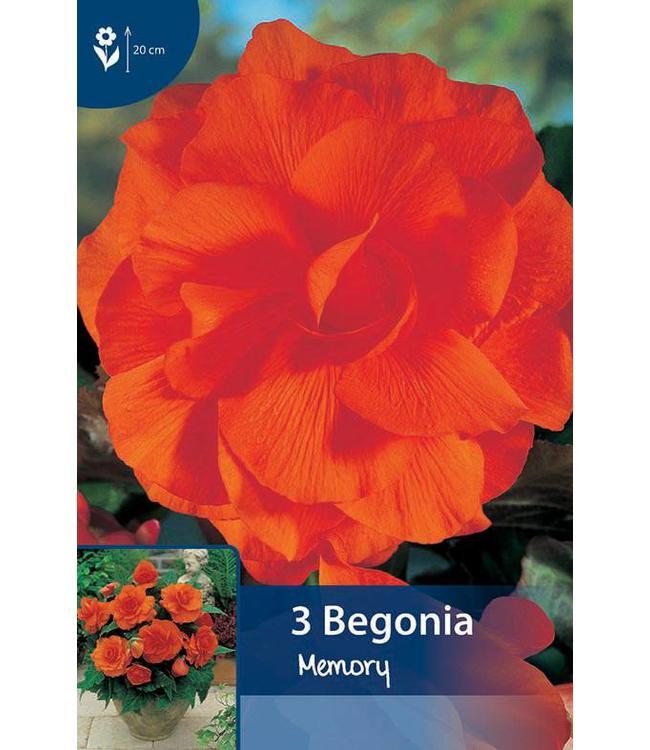 Begonia Dubbel Oranje