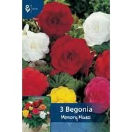 Begonia Dubbel Gemengd