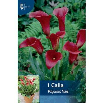 Calla Majestic Red (Zantedeschia)