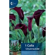 Calla Schwarzwalder (Zantedeschia)
