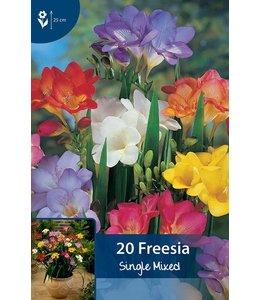 Freesia Single Mixed