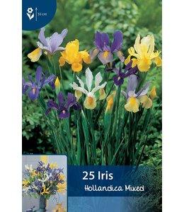 Iris Hollandica Gemengd