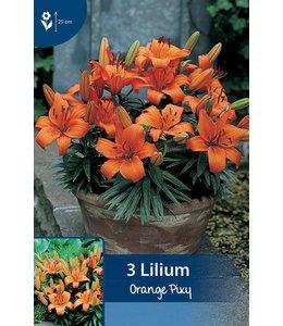 Lilie Orange Pixy