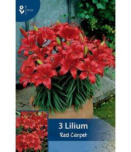 Lilie Red Carpet