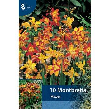 Montbretia Mischung (Crocosmia)