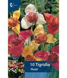 Tigridia Gemengd (tijgerbloem)