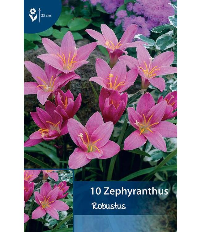 Zephyranthes Robustus