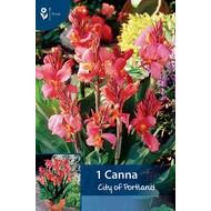 Canna City of Portland