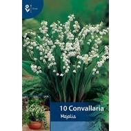 Convallaria Majalis (Lelietje van dalen)