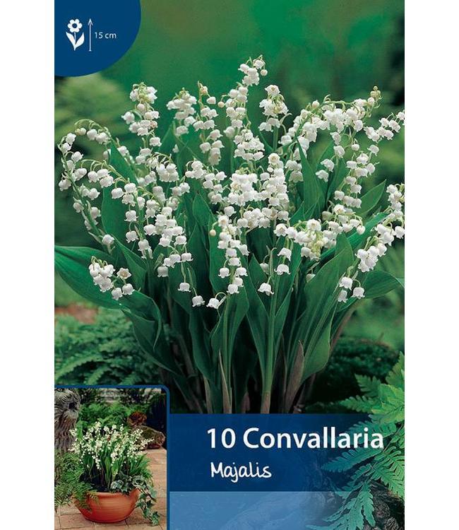 Convallaria majalis (Maiglöckchen)