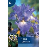 Iris Germanica Blauw