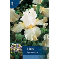 Iris Germanica Wit