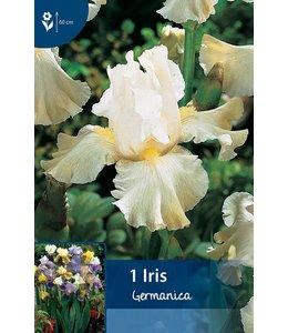 Iris, Iris germanica, baard iris, iris germanica kopen, iris germanica blauw