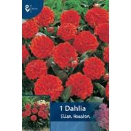 Dahlia Ellen Houston