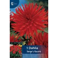 Dahlia Berger's Record