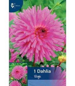 Dahlia Elga