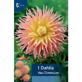 Dahlia New Dimension