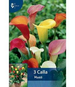 Calla Gemengd (Zantedeschia)