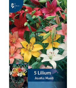 Lilien Asiatisch Mischung