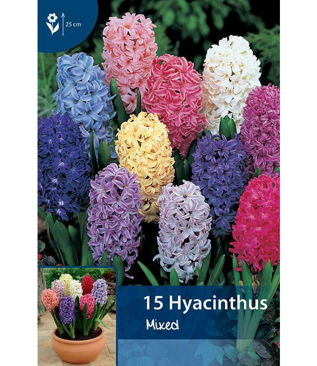 Hyacinth Mixed