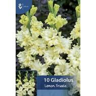 Gladiool Lemon Frizzle