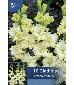 Gladiolus Lemon Frizzle
