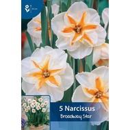 Narcis Broadway Star