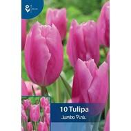Tulpen Jumbo Pink