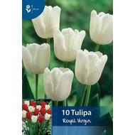 Tulpen Royal Virgin