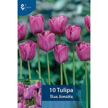 Tulpen Bleu Aimable
