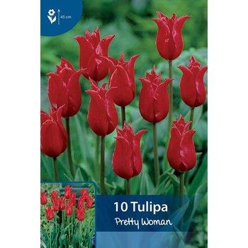 Tulpen Pretty Woman