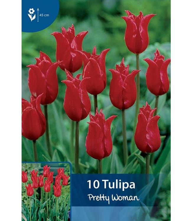 Tulpen Pretty Woman