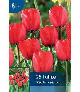 Tulp Red Impression