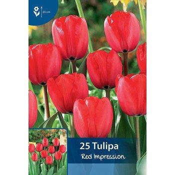 Tulpen Red Impression