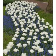 Springflowering