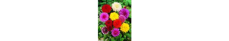 summerflowering