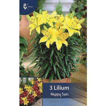 Lilie Happy Sun