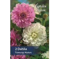Dahlia Flamingo Mixture