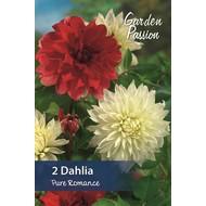 Dahlia Pure Romance