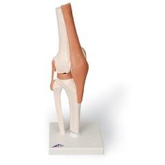 3B Scientific Kniegewricht op statief A82