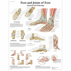 3B Scientific Poster Foot & Ankle