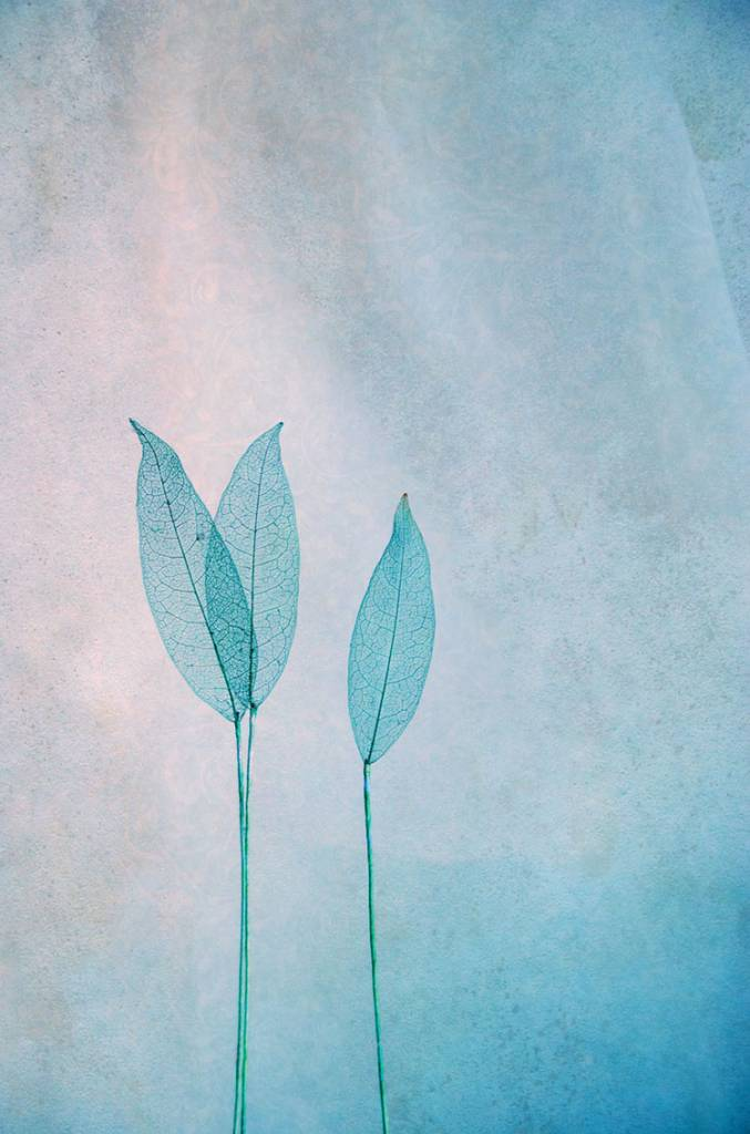 "Akustikbild inkl. Motiv ""Foliage"""
