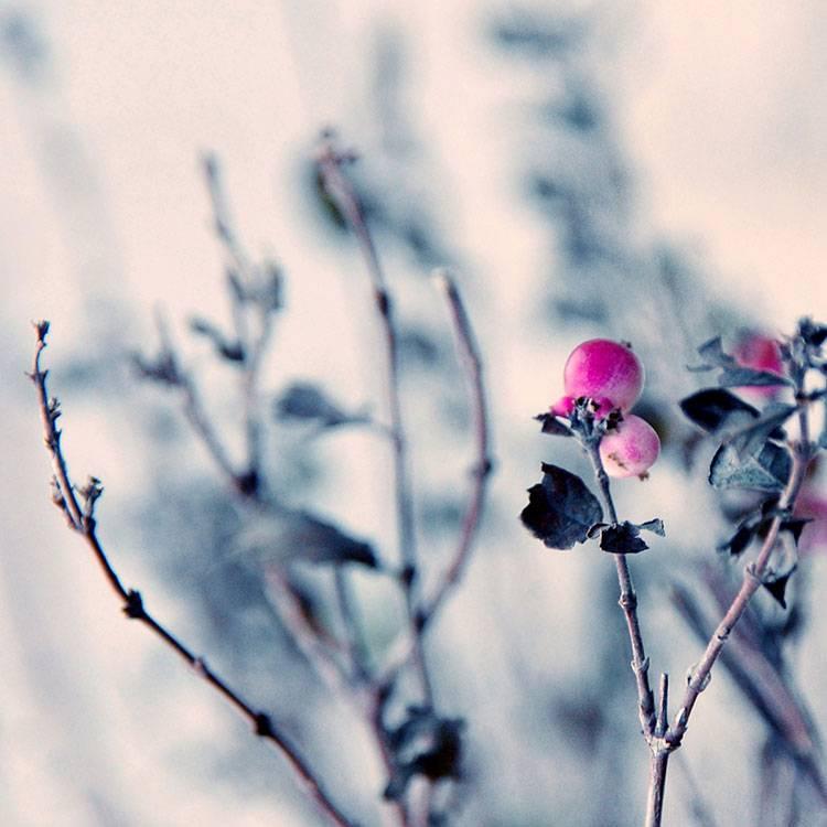 "Akustikbild mit Motiv ""Pink Berry"""