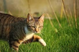 Kat in uw tuin