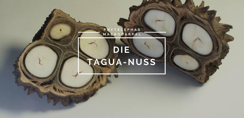 tagua_slider