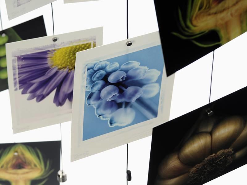 Trendform Steely Dan Photocord 200 cm