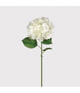 Large White Hydrangea