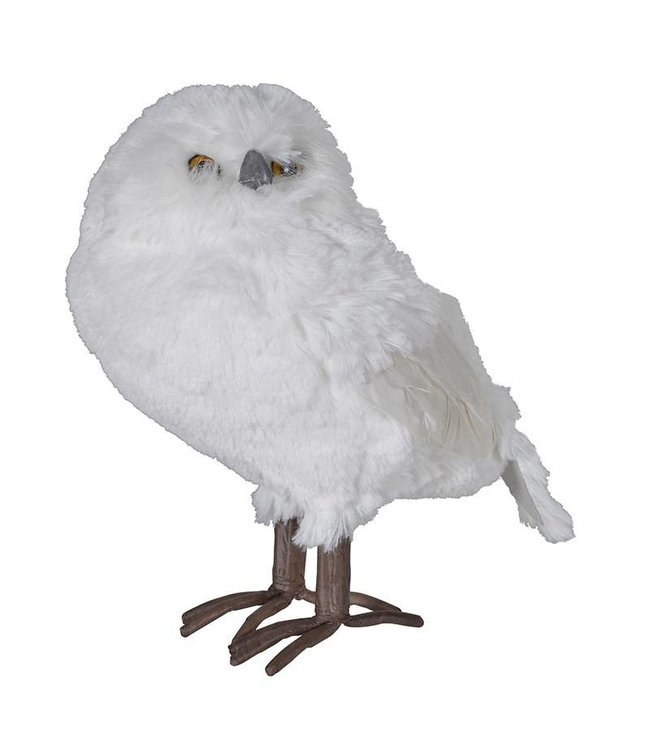 Medium Feathered Owl